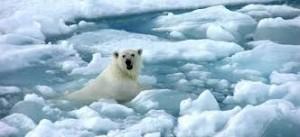otopljavanje medved